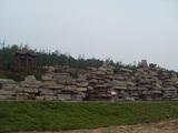 A-8 济南柿子园